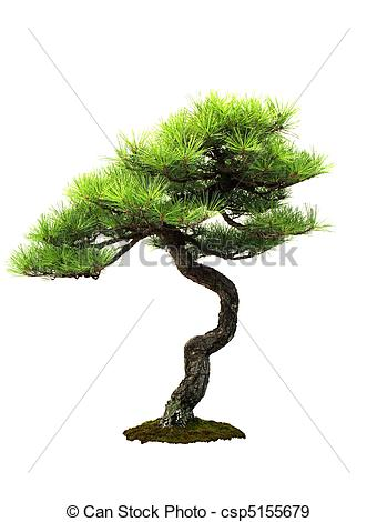 Pinus Images and Stock Photos. 2,931 Pinus photography and royalty.
