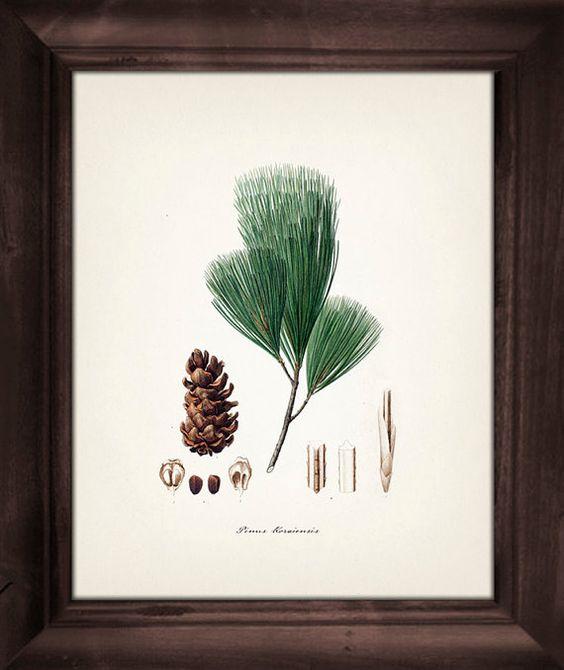 Trees, Fine art and Fine art print on Pinterest.