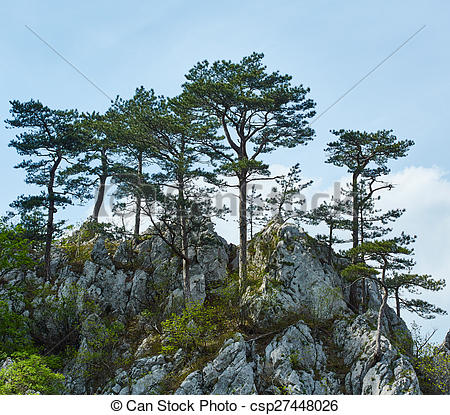 Stock Photo of Pinus nigra on mountains peak.