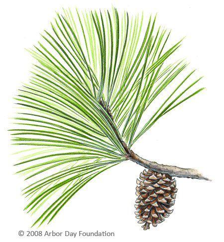 pine tree tattoos.