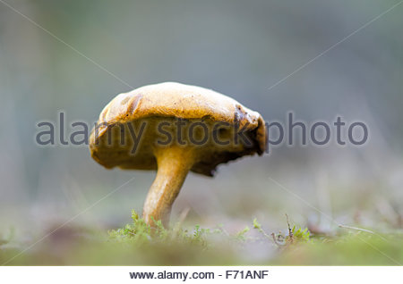Peppery Stock Photos & Peppery Stock Images.