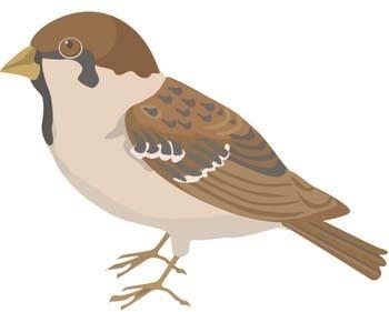 Burung Pipit 3 clip arts, free clip art.