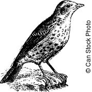Pipit Illustrations and Clip Art. 11 Pipit royalty free.