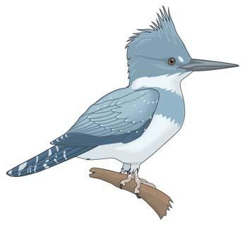 Burung Clip Art, Vector Burung.