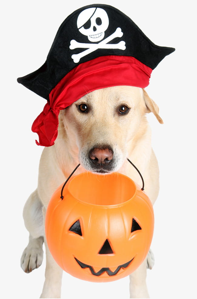 Halloween pirate dog PNG clipart.