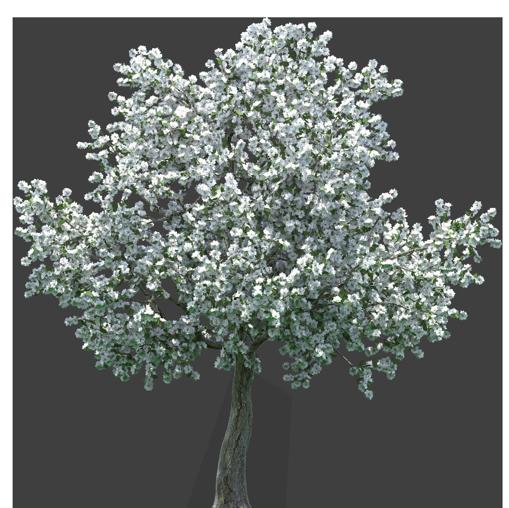 Realistic Blossom Tree PNG Clip Art.