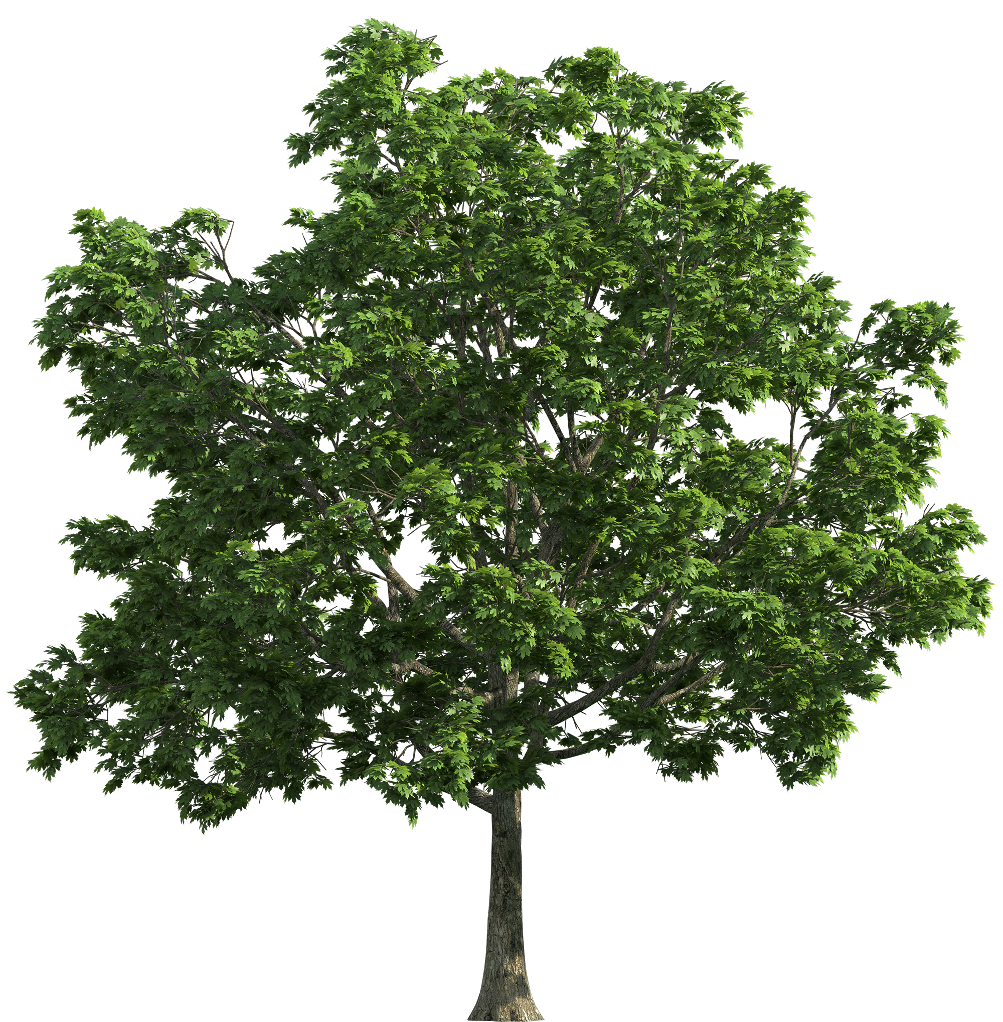Tree Transparent PNG Clip Art.