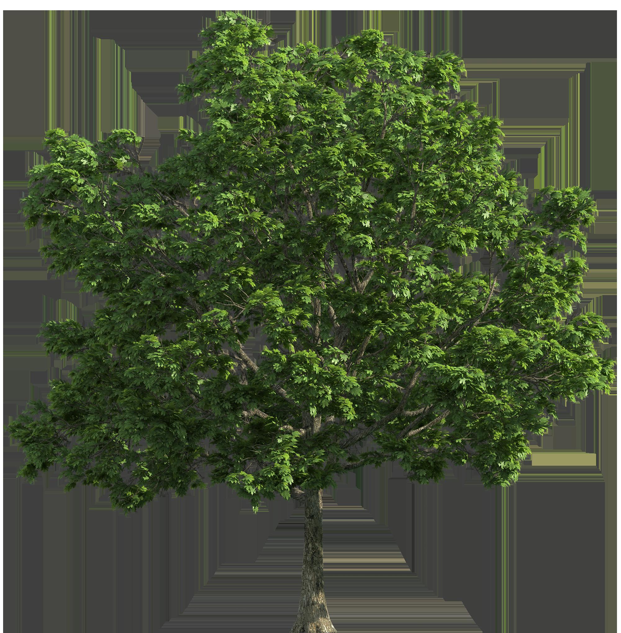 Tree Transparent PNG Clip Art.