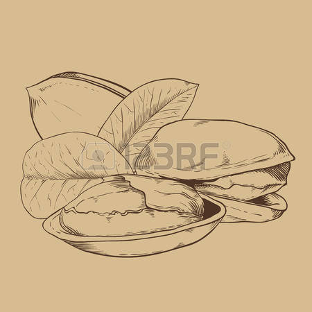 149 Pistachio Tree Stock Vector Illustration And Royalty Free.