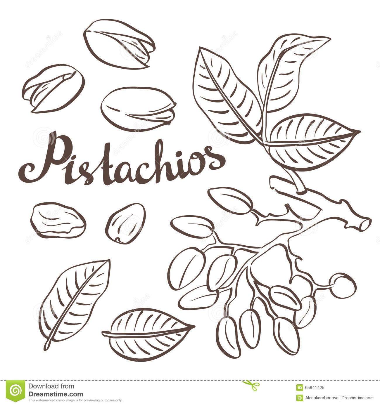 Pistachio Nuts With Leaves And Pistachio Tree. Stock Vector.