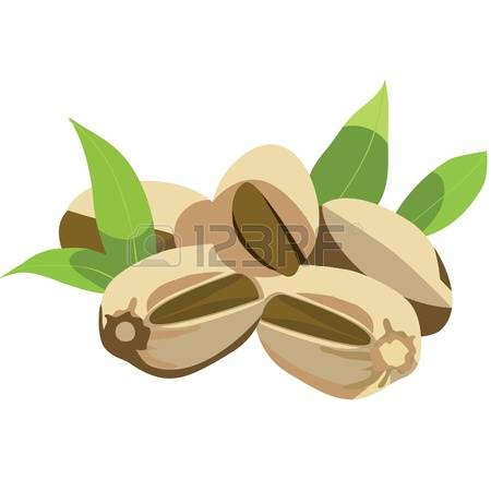 3,636 Pistachio Nuts Stock Vector Illustration And Royalty Free.