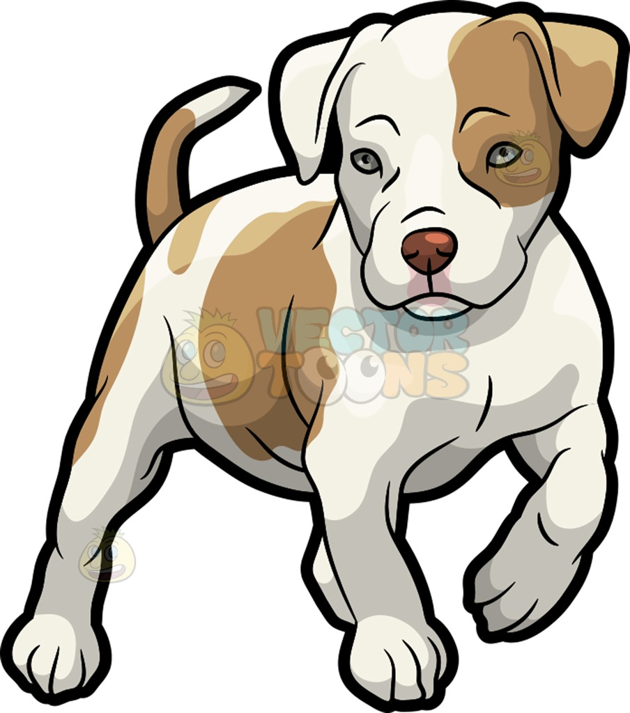A Pit Bull puppy » Clipart Station.