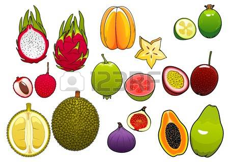 322 Pitahaya Stock Vector Illustration And Royalty Free Pitahaya.