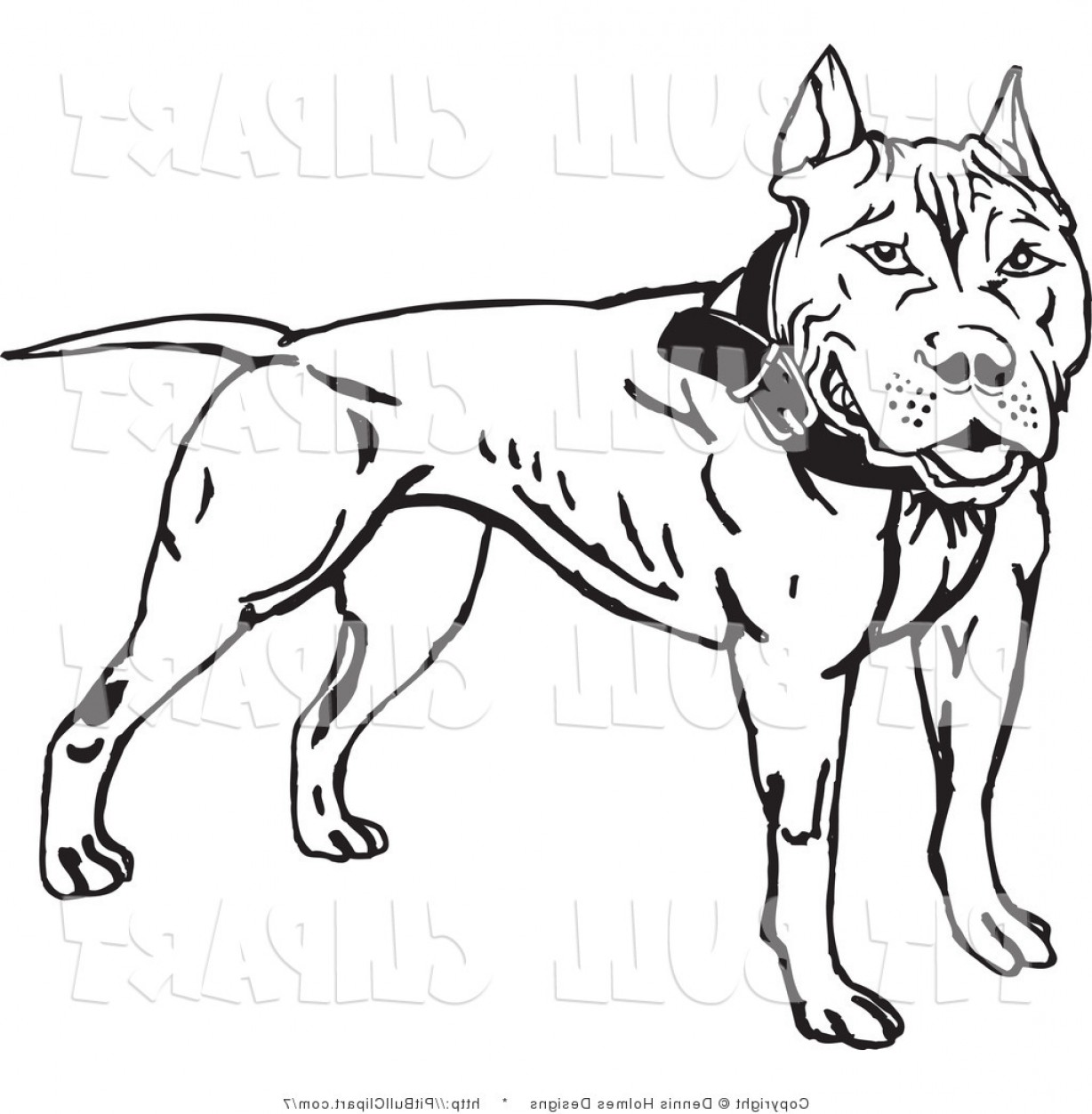 Clip Art Of A Black And White Pit Bull By Dennis Holmes.