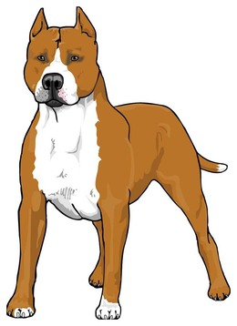 Download pitbull dog clipart American Pit Bull Terrier Clip art.