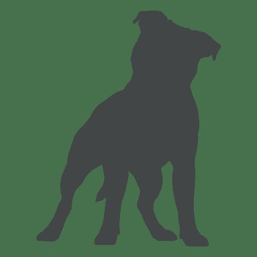 Staffordshire Bull Terrier American Staffordshire Terrier.