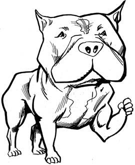 Pitt bull clipart #13