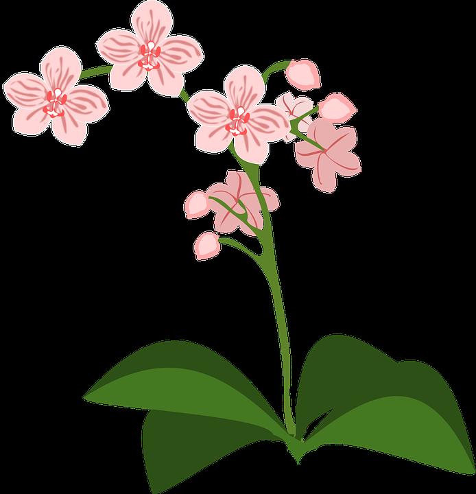 Orquidea clipart - Clipground