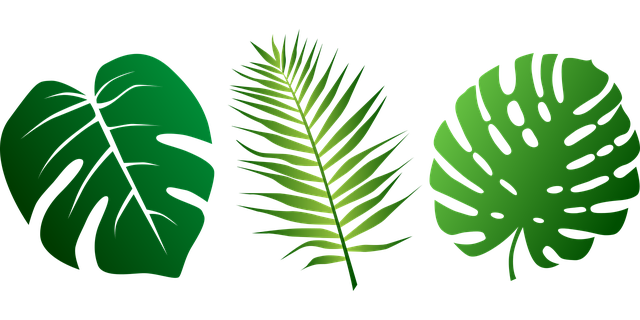 Free Vector Graphic: Leaves, Tropical, P #79463.