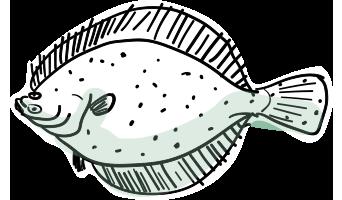 Ocean Fish Species.