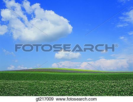 Stock Photograph of nature, landscape, scenery, scene, plain.