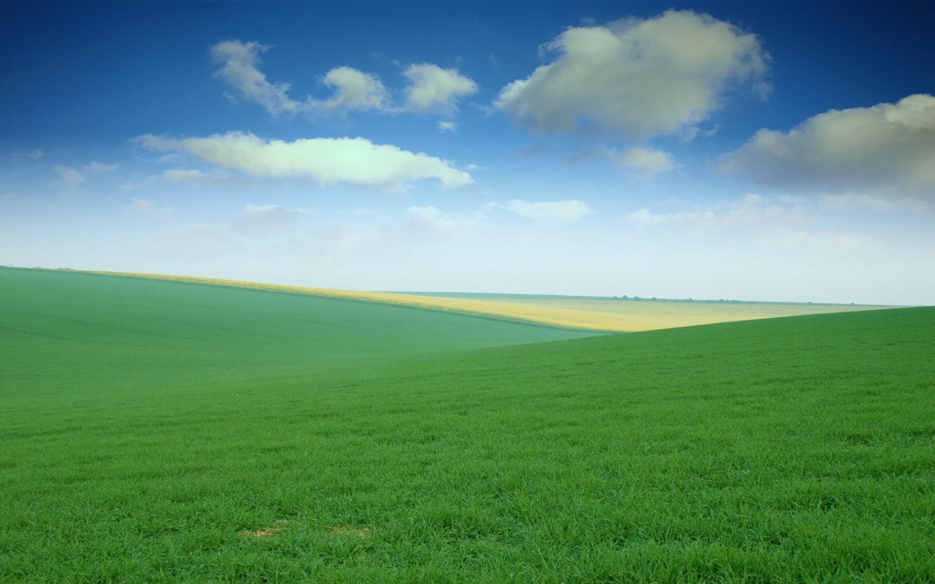 Green field clipart.
