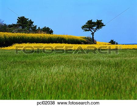 Pictures of day, grassland, plain, field, barley field, spring.