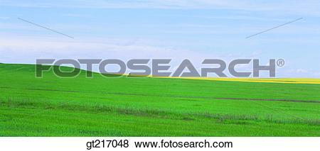 Pictures of nature, landscape, scenery, scene, plain, field, grass.