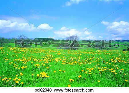 Stock Photography of day, field flower, wild flower, grassland.