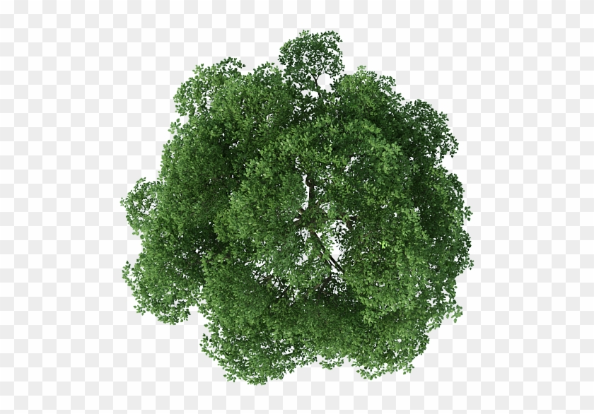 Rendering Top Tree View Download Free Image Clipart.