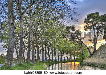 "Stock Photography of ""Plane tree avenue on the Canal du Midi."