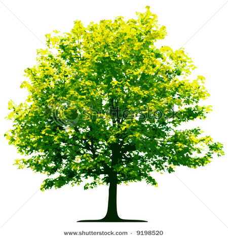 Stock Photo Of A Green Tree With Yellow Blooms.