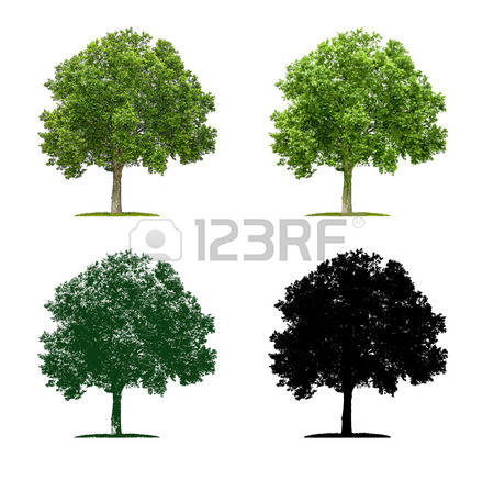 6,125 Plane Tree Stock Vector Illustration And Royalty Free Plane.