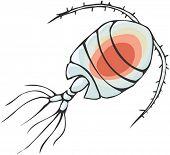 Ocean plankton clipart.