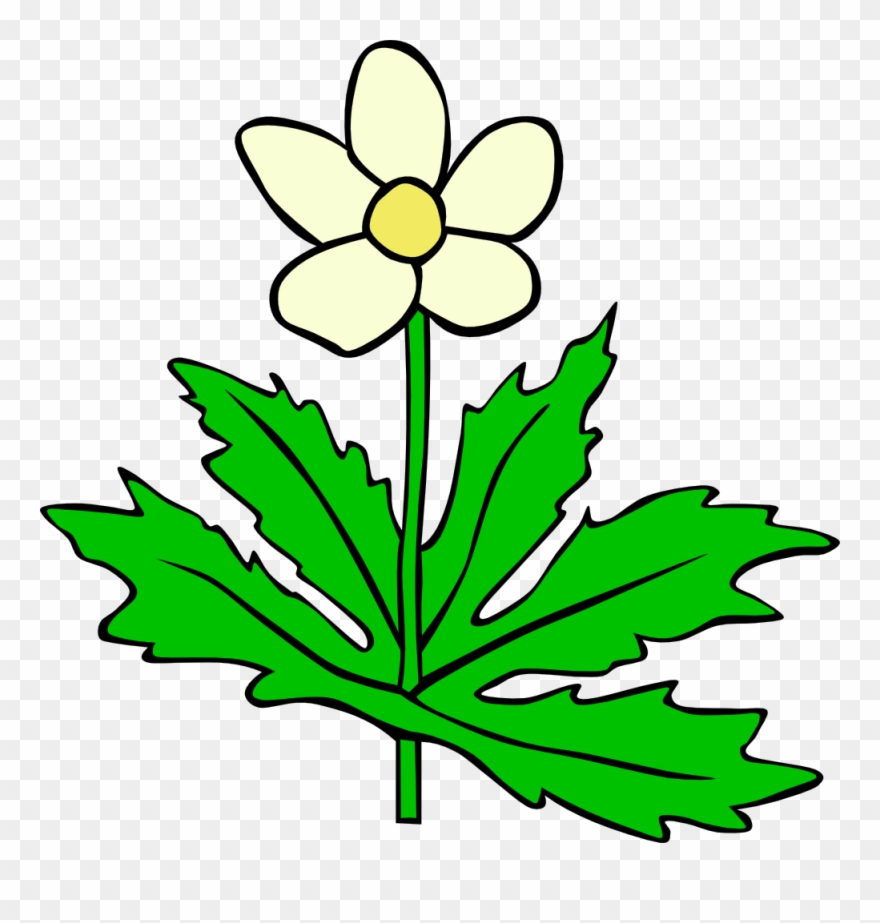 Plant With Flower Clipart.