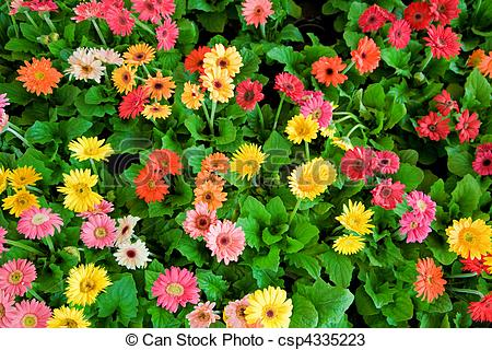 Stock Photos of Flower bed.