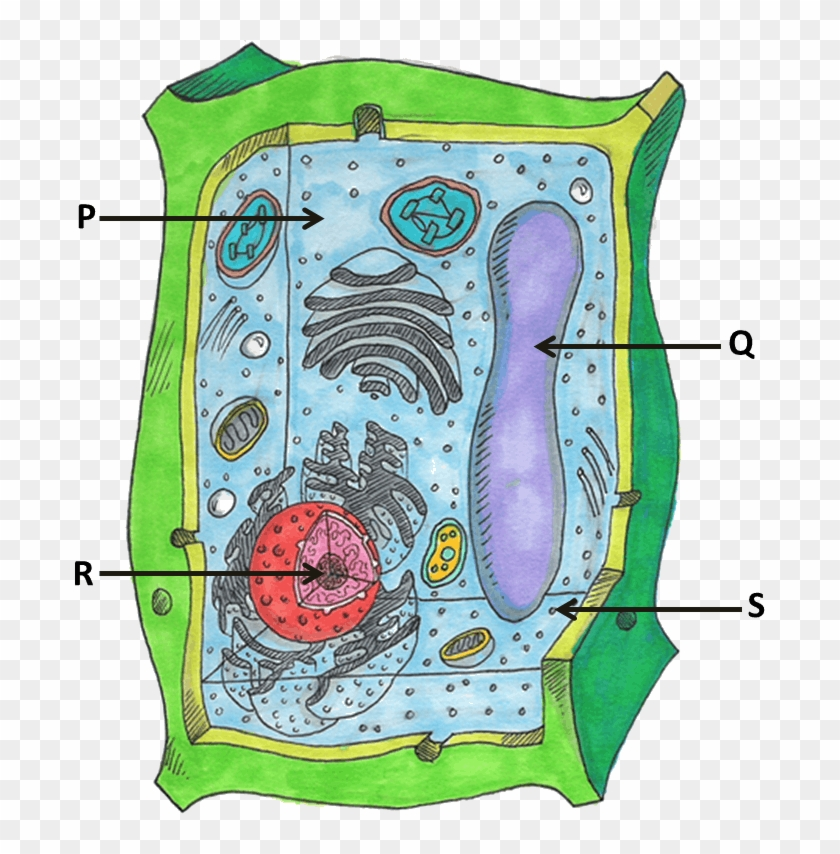 Image Showing Parts Of Plant Cells.
