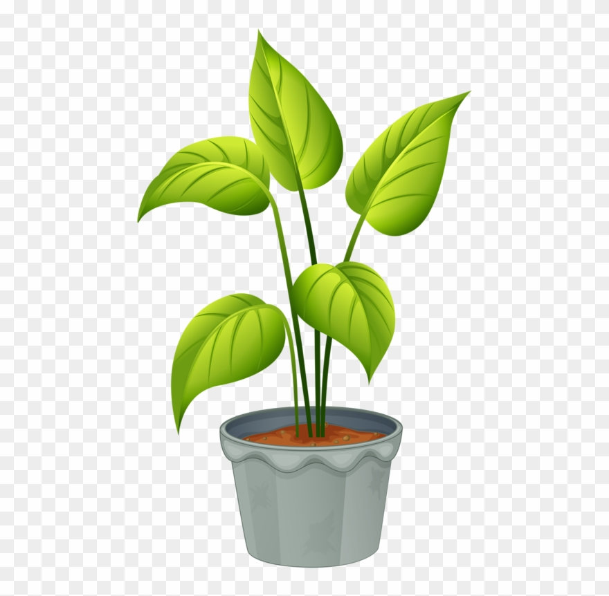 Green Home Plant.