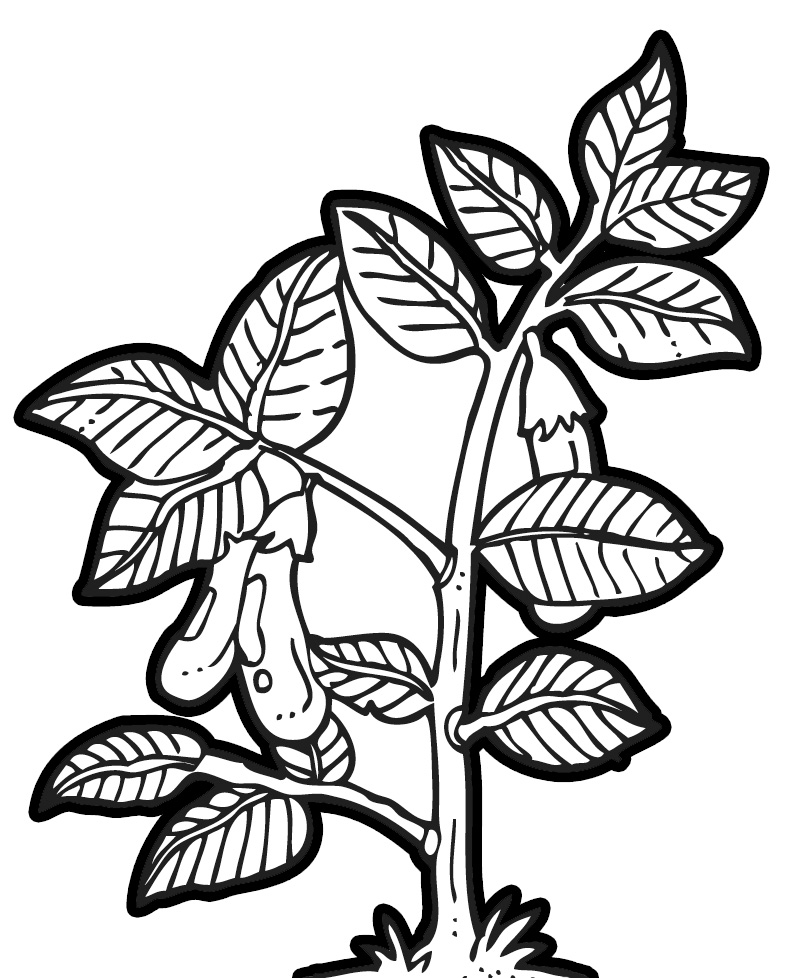 95+ Plant Clipart Black And White.