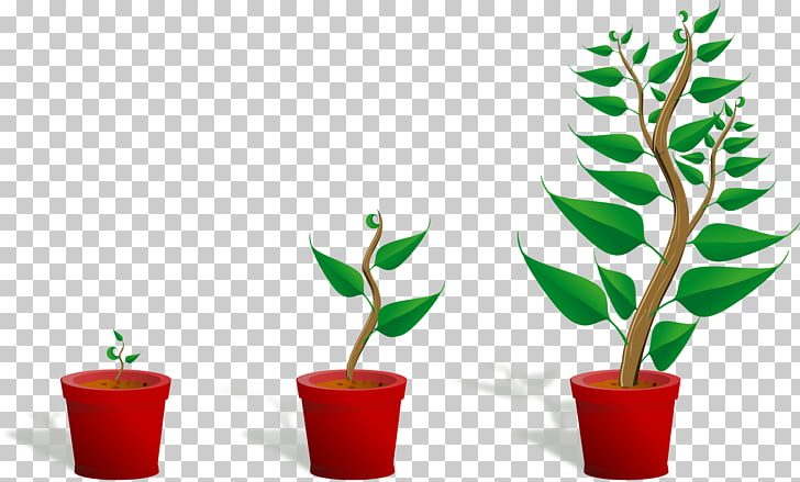 Bonsai Seedling Computer file, Potted plants PNG clipart.