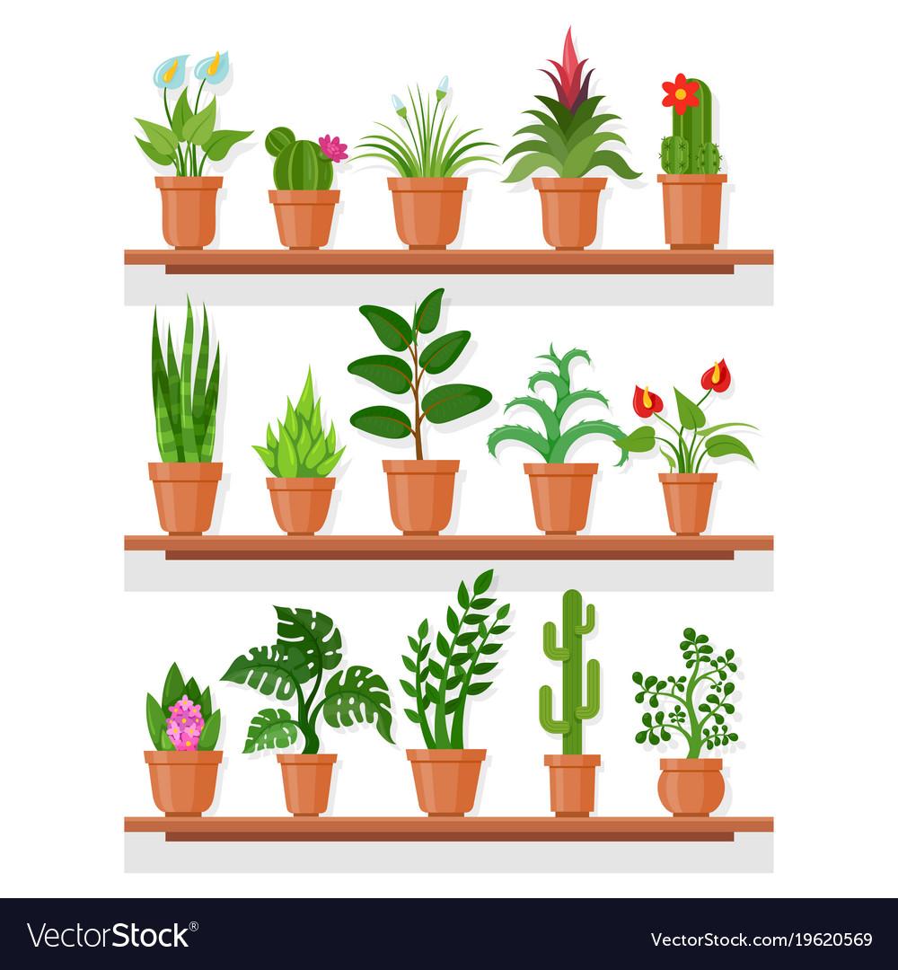 Indoor plants on shelf.