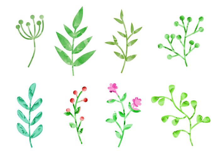 Watercolor Plants Vector.