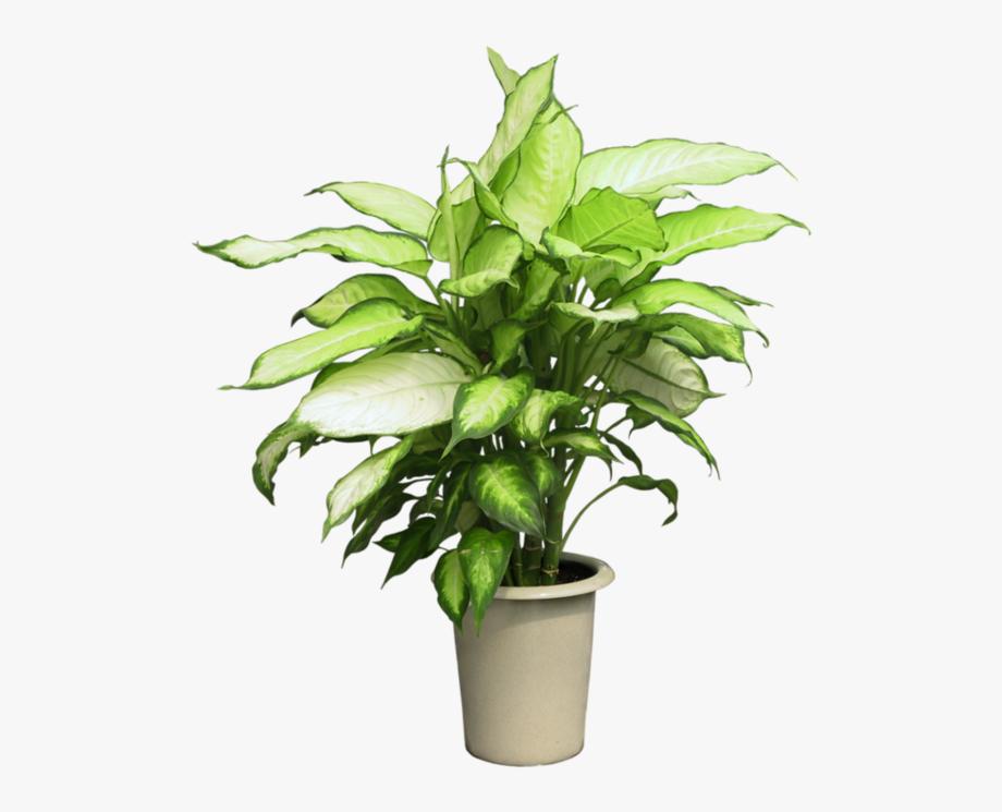 Pot Plant Clipart Group Plant.