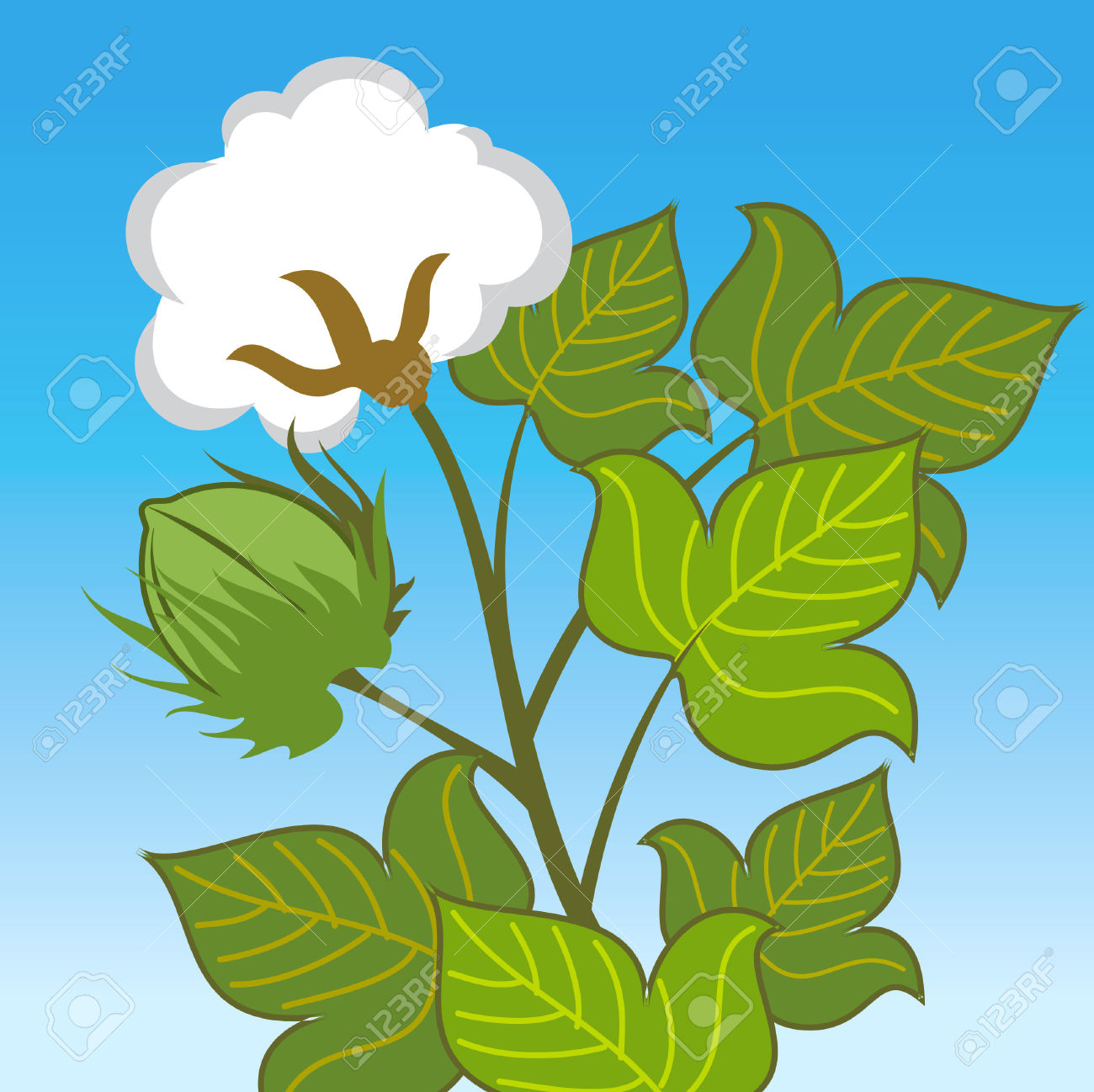 Cotton Plant Close Up On Blue Background Royalty Free Cliparts.