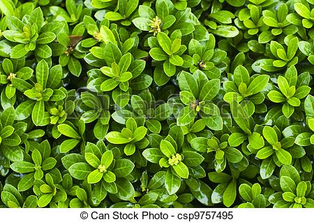 Stock Images of close up of bush plant.
