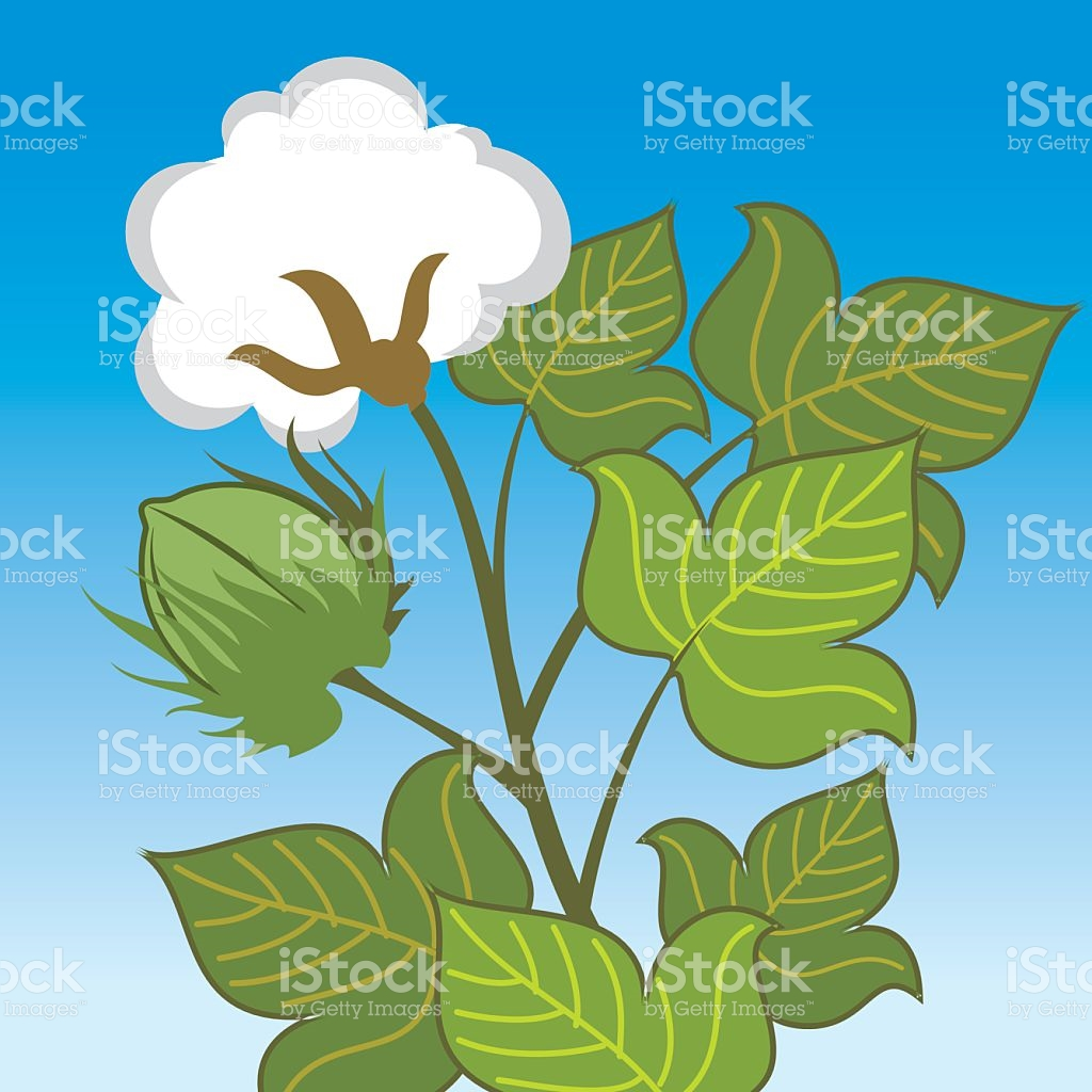 Vector Cotton Plant Closeup stock vector art 538948813.