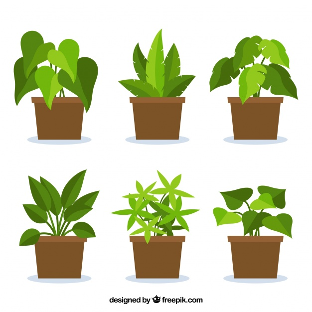 Plant Vectors, Photos and PSD files.
