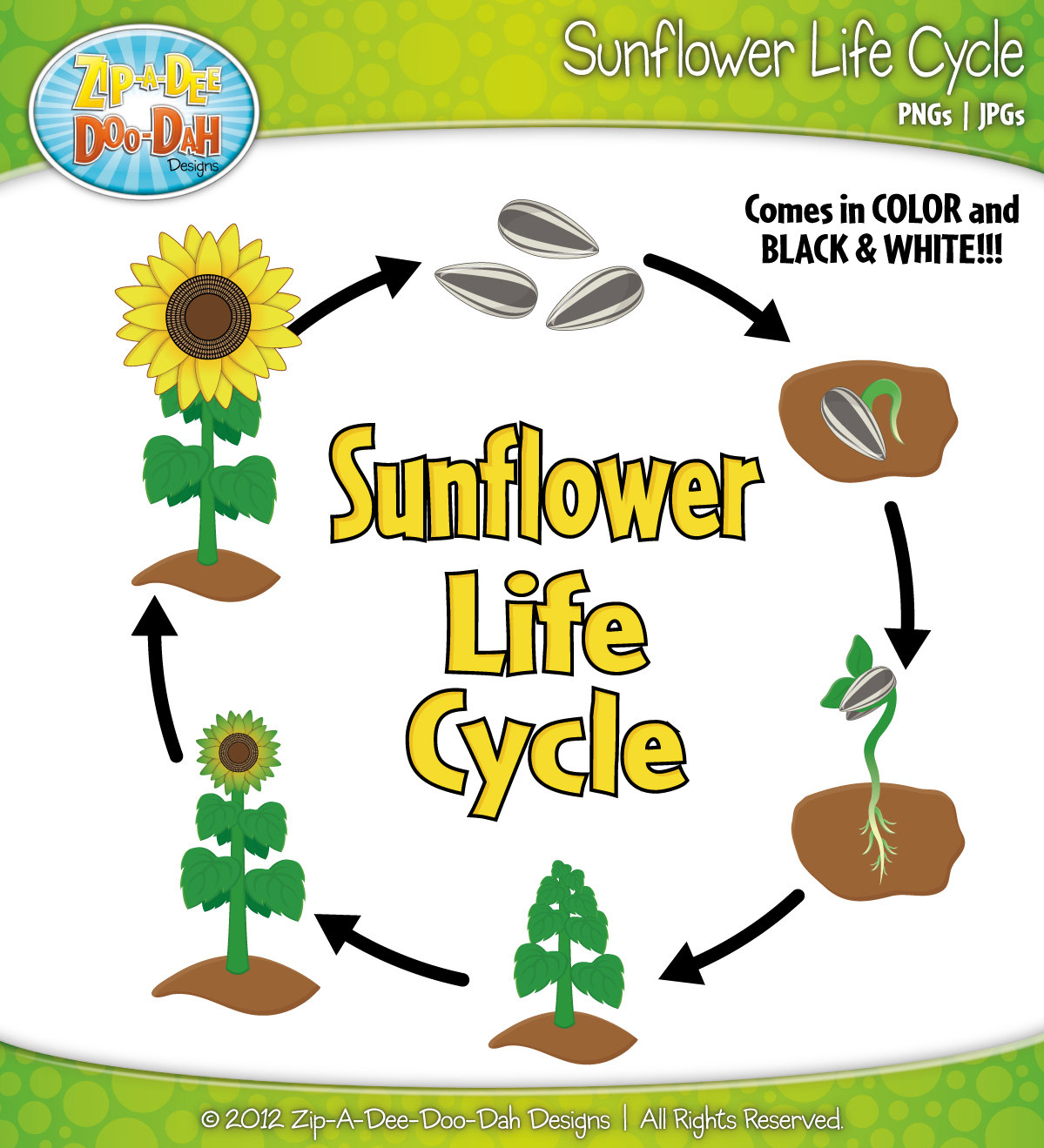 Plant life cycle clipart 7 » Clipart Station.