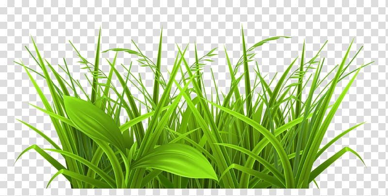 Decorative Grass , green leaf plants transparent background.