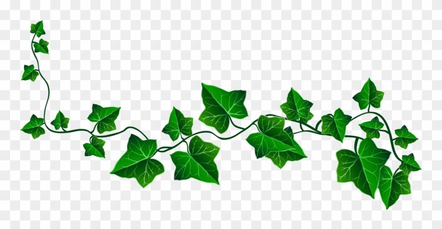 Vine Ivy Decoration Png Clipart Picture.